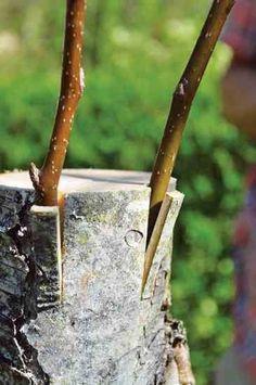 Easy And Cheap Ideas: Hosta Garden Ideas Sun backyard garden vegetable pots.Sunny Corner Garden Ideas backyard garden beds tips. Backyard Garden Landscape, Small Backyard Gardens, Garden Landscaping, Garden Oasis, Terrace Garden, Landscaping Ideas, Grafting Fruit Trees, Grafting Plants, Organic Gardening