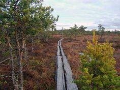 Valkmusan kansallispuisto   Hirvikoski