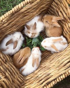 Cute Baby Bunnies, Cute Babies, Somebunny Loves You, Here Comes Peter Cottontail, Cute Animal Photos, Coloring Easter Eggs, Animal 2, Cozy Cottage, Colorful Birds
