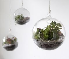 Hanging glass ball terrarium.