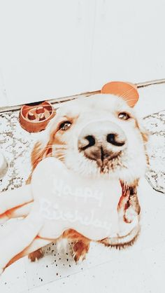Puppy Dog Eyes, My Themes, Cute Creatures, Fur Babies, Dogs And Puppies, Cow, Moose Art, Cute Animals, Pets
