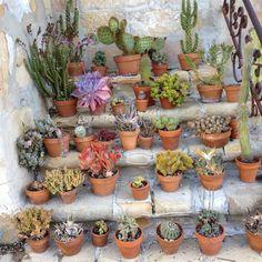 Santa Barbara Cactus