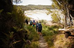 One of New Zealand's nine great walks, the Rakiura track on Stewart Island is a fantastic way to see some of the most remote and unspoiled beaches and forest in New Zealand. Great Walks, Forest Hill, The Beautiful Country, British Isles, Amazing Destinations, New Zealand, Beaches, Remote, Track