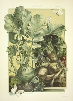 Kohlrabi, Leeks, Turnips: plate from The Plant in Art and Trade, by Anton Seder, 1890