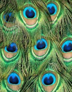 Tra le piume occhi blu che ci osservano. #mmgfantasia/03 pic.twitter.com/nA47zhWnCp