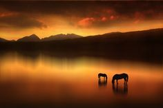 """The Horses at Sunset,"" by Jenny Woodward"