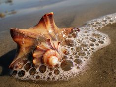 Sea shell by the shore ~