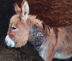 Petition · Cowboy Church of Colbert County: Cancel the donkey rodeo portion of the St Jude Trail Ride Benefit · Change.org