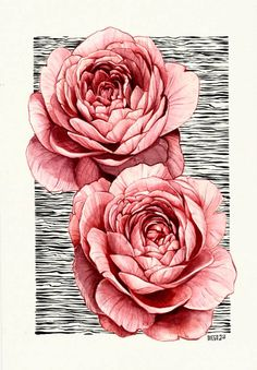 English Roses  Watercolor Floral Artwork, Modigliani, English Roses, Gcse Art, Art Portfolio, Botanical Art, Ink Art, Pencil Drawings, Art Drawings