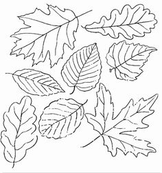 how to draw a maple leaf and an oak leaf inkspired musings A Rainy