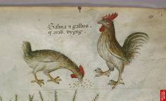Roosters. Italy. c.13578-44. BL | Flickr - Photo Sharing!