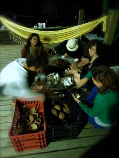 ordenhando os cocos (isso vai dar muqueca!)