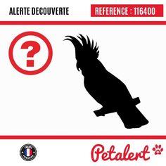 Cette Alerte est désormais close : elle n'est donc plus visible sur la plate-forme www.petalert.fr. L'animal a pu être remis à son propriétaire Merci pour votre aide.