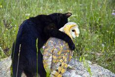 Fum the house cat hugs his best friend, Gebra the barn owl, in Tarragona, Spain