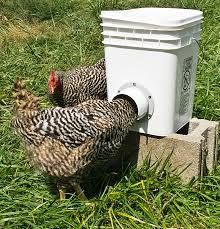 """chicken feeder by Laura Taylor Bucket with a water tight lid, or trash can even. 6"""" 90° elbow - I have Australorp, big combs. Trace the elbow in 1, 2 or even 3 spots around the bucket. I use a dremel multimax to cut the holes. Either cut out a small notched section at the end of the elbow or cut the hole so the bottom of the elbow is just above bottom of the bucket. I use PVC cement, holds up a couple years to hard use before you have to cement back in place."""