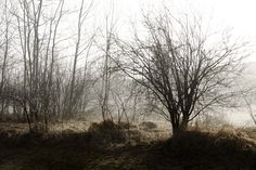 'matin' by linda Vachon Country Scenes, Country Roads, Landscape, Pictures, Photography, Art, Mists, Photos, Art Background