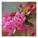 Pretty cherry blossom poster prints
