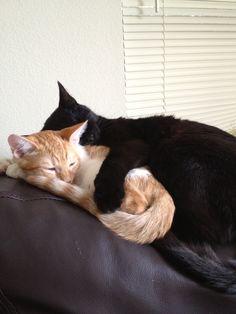 Kitty love: Miles and Otis