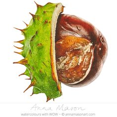 Can you hear the conkers falling to the ground?'/ Time to go collecting them, walking all around./ When the leaves fall from the trees, we know it's time/ To collect conkers from the ground/ All of them are MINE! Watercolor Projects, Watercolor Art, Anna Mason, Vegetable Prints, Conkers, Chestnut Horse, A Level Art, Leaf Art, Natural Forms