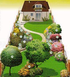 план насаждений на участке какие растения сажать