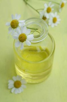 Top 10 Medicinal And Health Benefits Of Chamomile