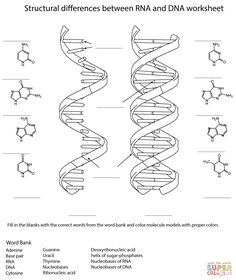 Translation transcription worksheet biology high school