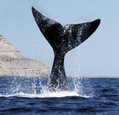 ON #15 - Destinos: Puerto Madryn, Patagonia Argentina.