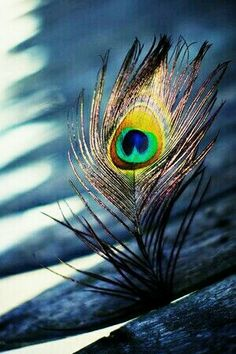 Morpankh Peacock Feather