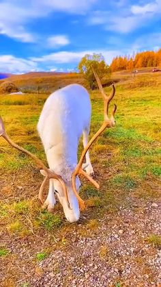 Unusual Animals, Colorful Animals, Large Animals, Cute Animals, Beautiful Creatures, Animals Beautiful, Albino, Science And Nature, Animal Photography