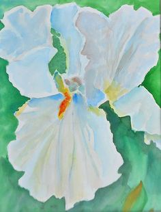 White Iris, Watercolor 11 x 15 on Arches paper. Matted in white to 16 x + shipping White Iris, Arches, Paintings, Watercolor, Paper, Art, Pen And Wash, Art Background, Watercolor Painting
