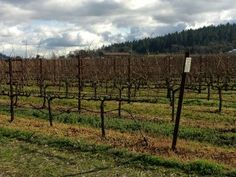 Choosing a Vineyard for your celebration