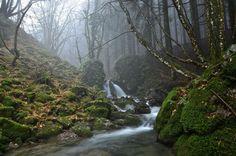 Forest by Giuseppe Atzeni on 500px