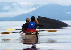 whale kayaking - Point Adolphus Alaska