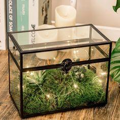 black terrarium Reptile Habitat, Paint Brass, Terrarium Containers, Thanks Card, Box Houses, Glass Boxes, Congratulations Card, Pure Copper, Rose Gold Color