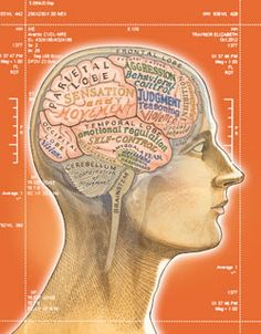 How neuroscience is making its way into the courtroom