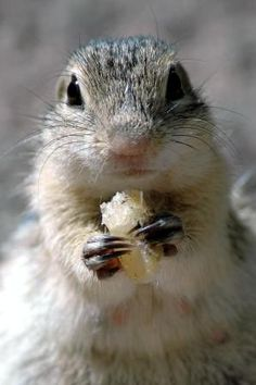 hungry-chipmunk