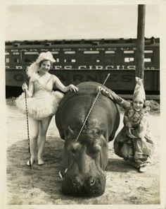 hippo in circus - vintage Circus Vintage, Old Circus, Night Circus, Vintage Circus Performers, Circus Book, Circus Train, Vintage Carnival, Circus Theme, Circus Party