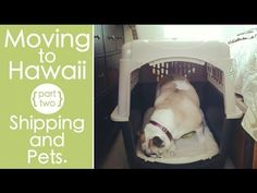 MOVING TO HAWAII {Shipping and Pets}