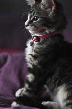 ラブリー-KittyCats、kitt3nl0ve:...