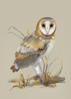 Barn Owl digital Illustration; Kinga Kwiczor
