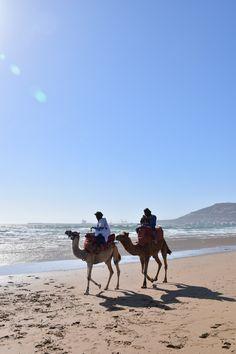 Dromadaire Agadir Road Trip, Station Balnéaire, Visit Morocco, Marrakech, Destinations, To Go, Book, Places, Travel