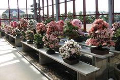 De studio is de meest complete bonsai speciaalzaak van Nederland en biedt u een breed scala aan bomen en producten voor uw hobby.  www.hoka-en.nl