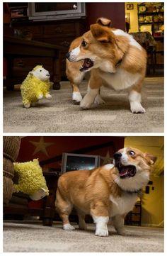 20 photos hilarantes de chiens terrorisés pour des raisons ridicules