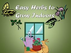 Easy herbs to grow in a bucket or tub