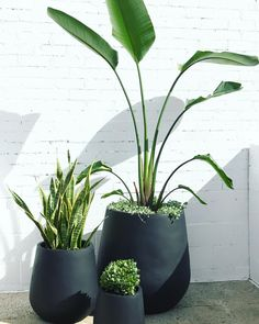 Our most popular arrangement of cluster of pots to maximise the use of space of your outdoor space. Design and install by us. Balcony Plants, Outdoor Balcony, Patio Plants, Outdoor Planters, Balcony Garden, Backyard Patio, Garden Pots, Backyard Landscaping, Indoor Plants