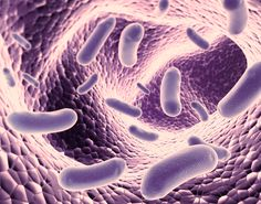 The growing demand for probiotics among the rising number of health aware consumers is anticipated to drive the growth of the global probiotics market during the forecast period.  Explore Full Report at: http://bit.ly/2f1F9c2