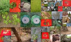 Medicinal Rice based Tribal Medicines for Diabetes Complications and Metabolic Disorders (TH Group-691) from Pankaj Oudhia's Medicinal Plant Database