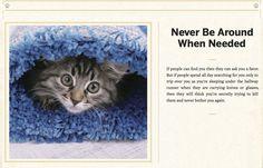 Cat's advice 7