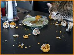 E quando você se distrai um minuto. | 30 imagens reais demais para todo mundo que vive com um gato