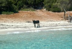 Donkey by the Sea...